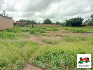 Un demi hectares en vente à Kouba face à la route national N°5 route de koubri