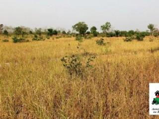 Vente de terrain d'une superficie de 69 hectares à Bama, province du Houet.